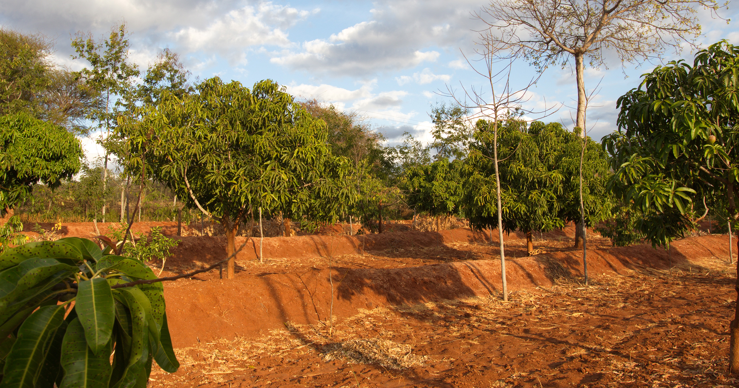 Die Auszahlungen für die Bäume sind abgeschlossen