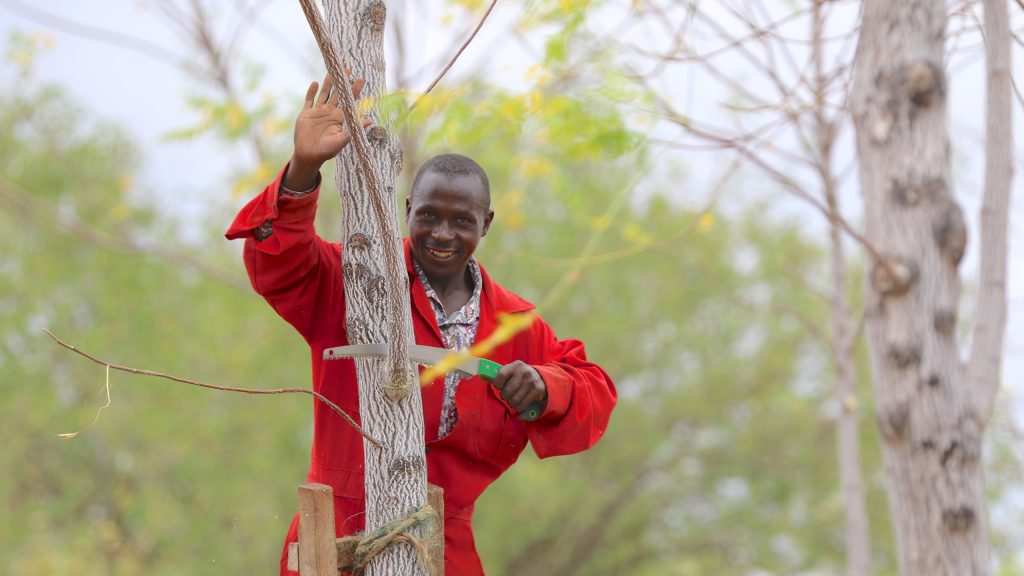 Tree pruning at Kiambere plantation, Kenya 2017