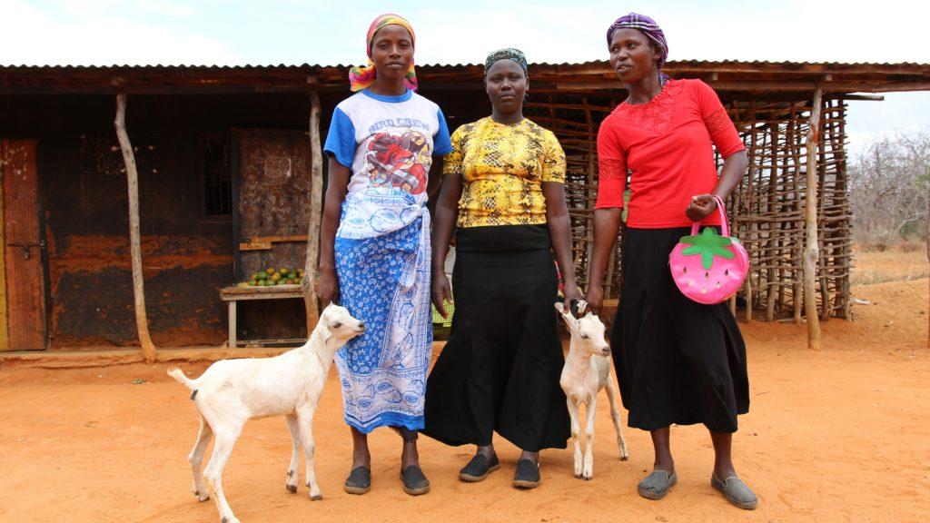 Mwethi Mwendi took a microloan of 100 USD, bought goats and improved living conditions for the entire village.