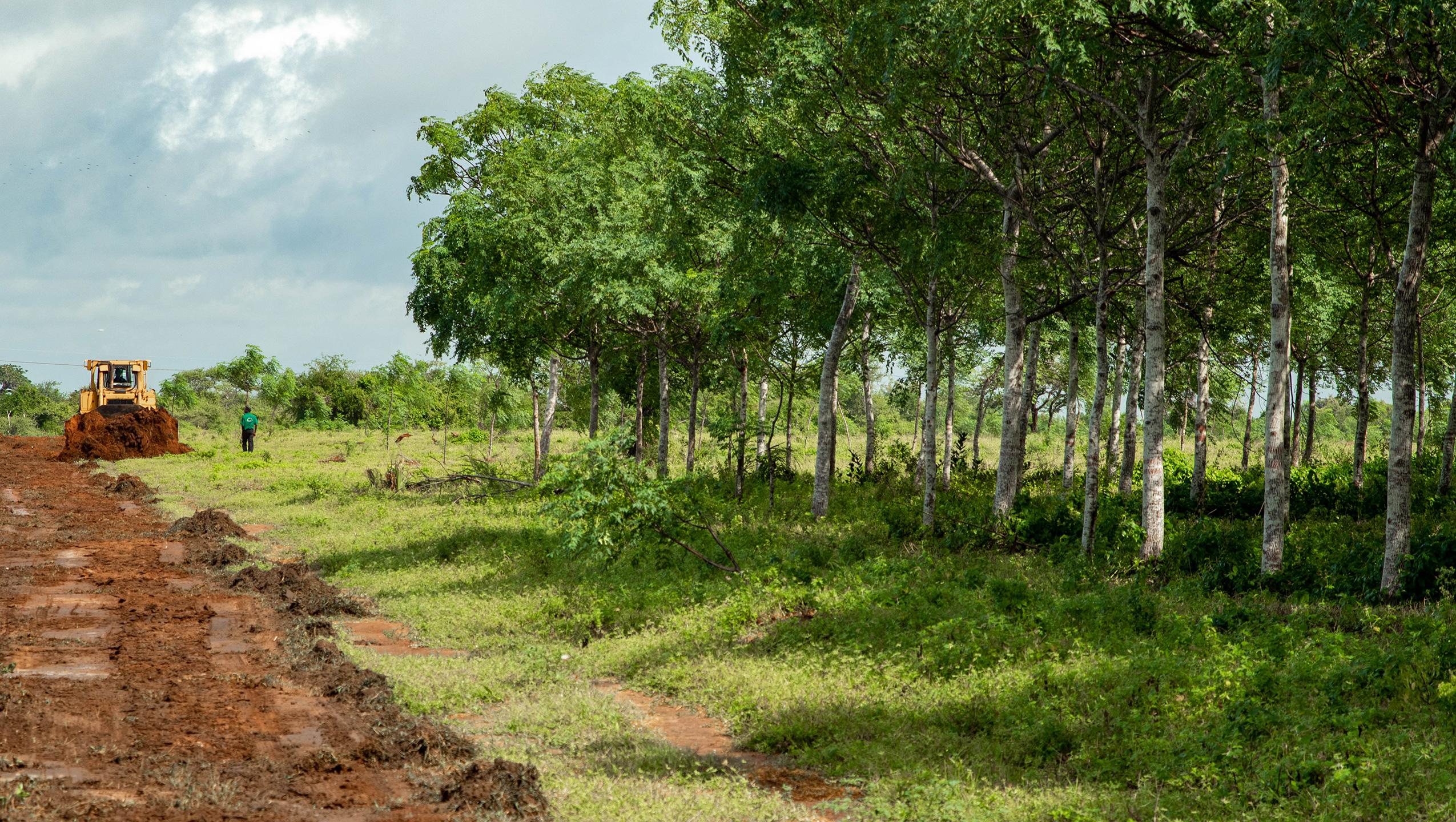 Bäume pflanzen reduziert die Klimabedrohung